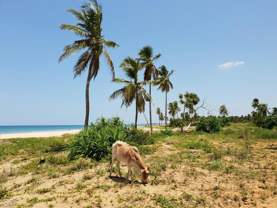 plage Nilaveli beach Pigeon Island sri lanka