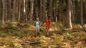 trekking in het bos