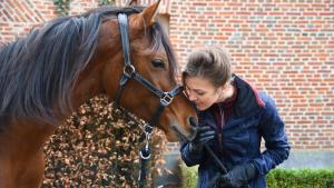 coaching paarden en ruiters