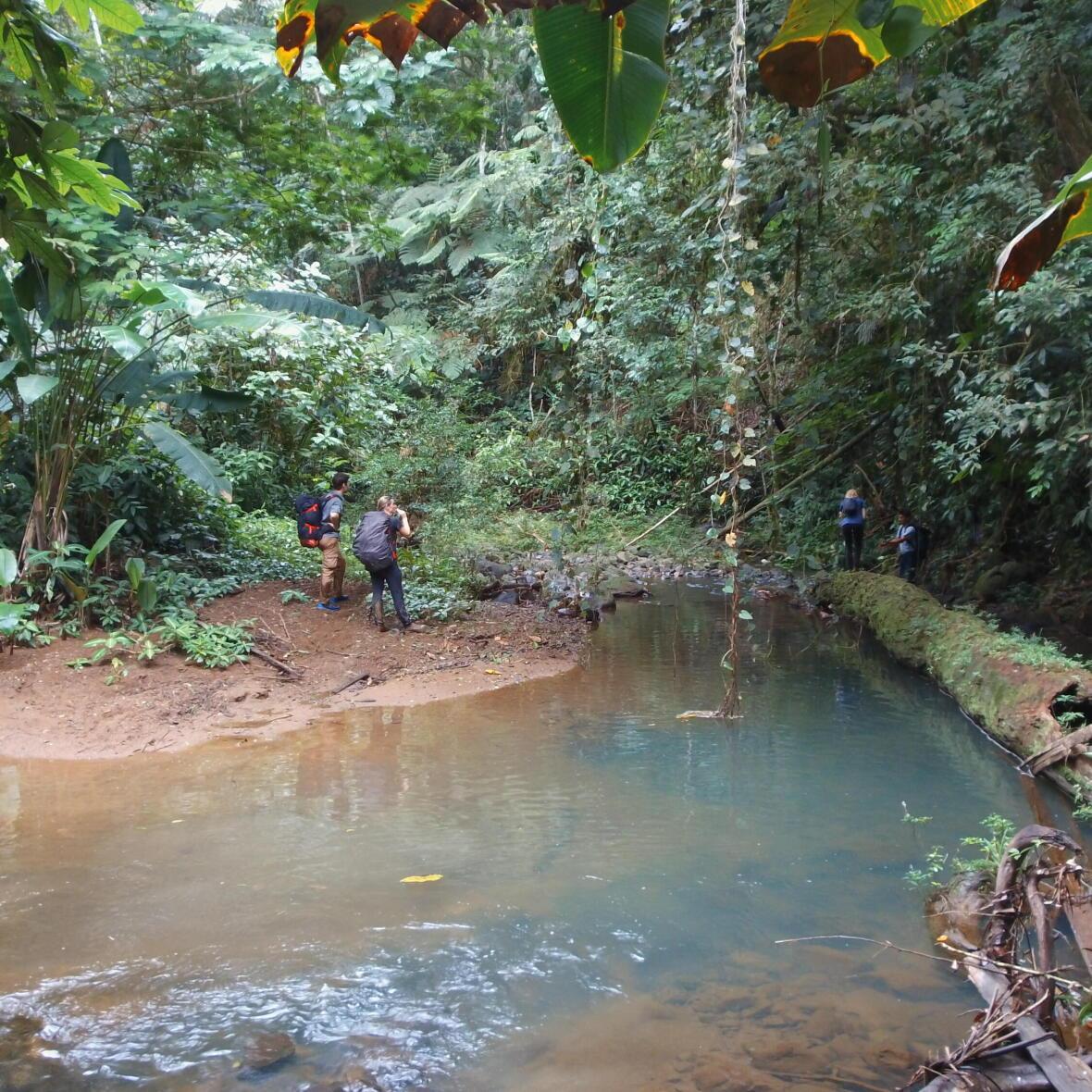 trek dans la forêt tropicale du costa rica