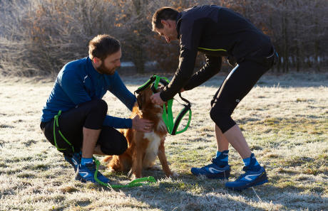 Canicross harnais chien