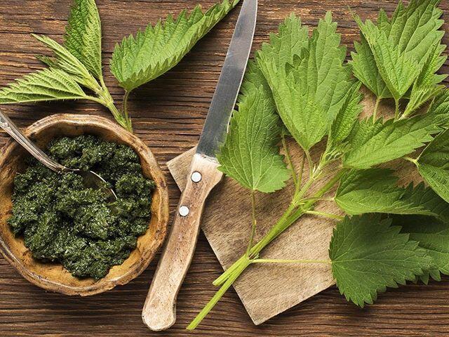 Plantes_comestible_nature_cueillette_naturopathie_botanique_randonnée_cuisiner_reconnaitre_recettes