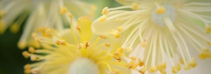 cueillette_nature_botanique_randonnée_quechua_plantes_detox_naturopathie_fleurs_recette_cueillir