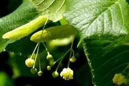 barresdecereales_snack_healthy_randonnée_proteger_planete_zerodechet_faitmaison_recette_sport_nature_naturehiking