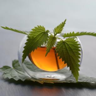 recette_cueillette_ortie_nature_randonnée_naturehiking_cueillir_plantes_naturopathe_botanique
