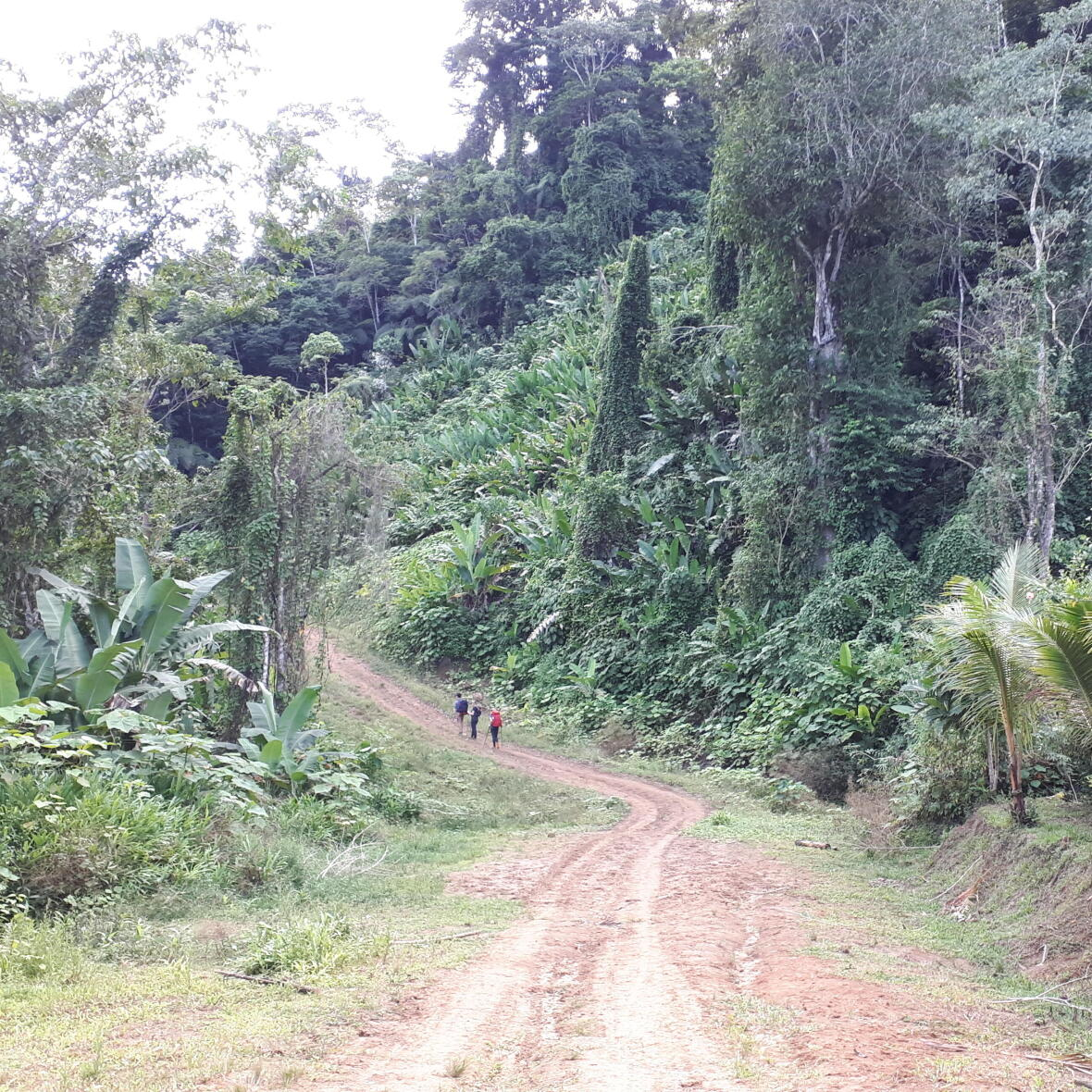 rando dans la boue de la jungle du costa rica