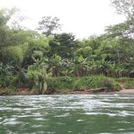 itineraire trek dans la jungle du corcovado