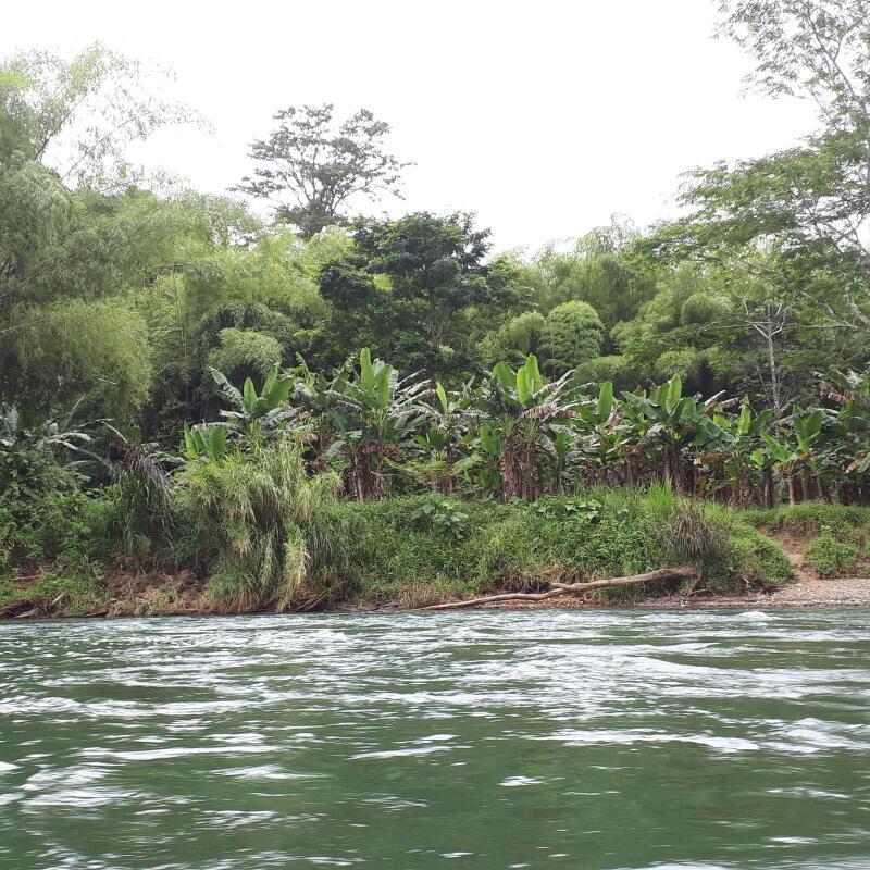 itinéraire d'un voyage dans la jungle du Corcovado