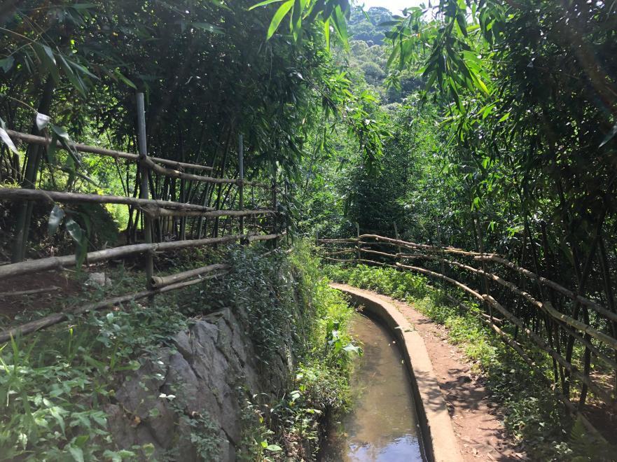 跟著晨晨登山隊來一趟夏日親子健行 坪頂古圳步道