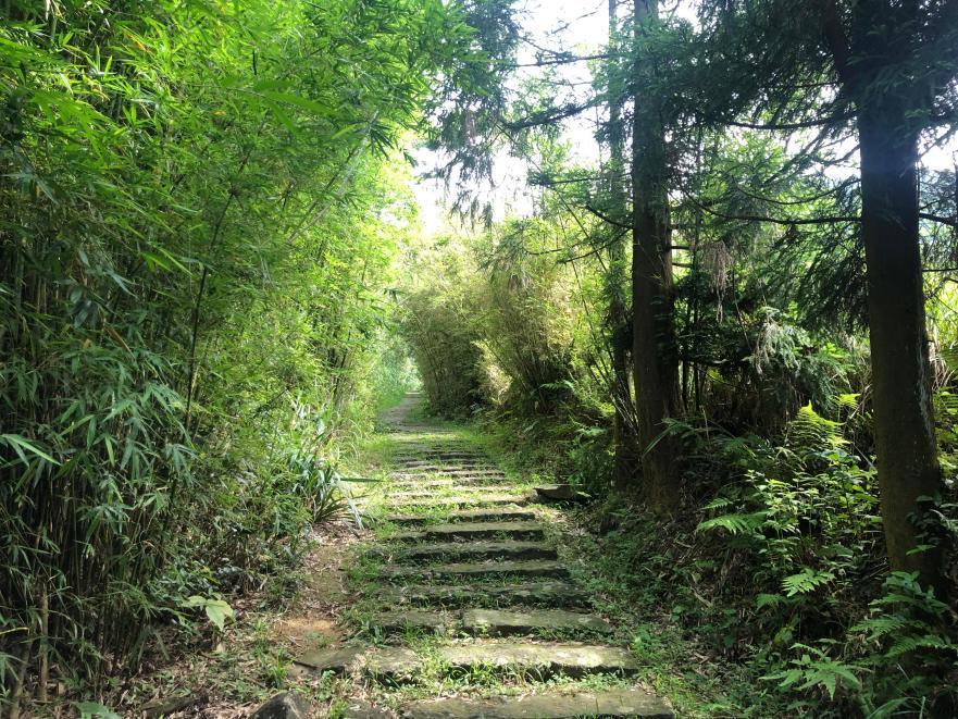 跟著晨晨登山隊來一趟夏日親子健行-image03