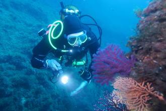 潛水的5大好處