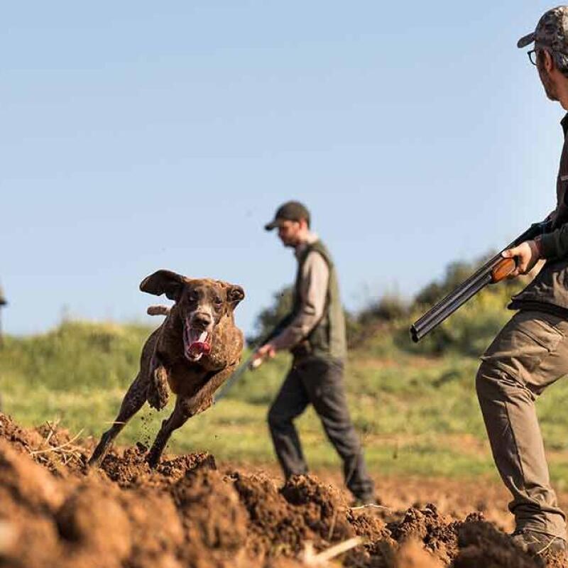 sav entretien reparation chasse et tir