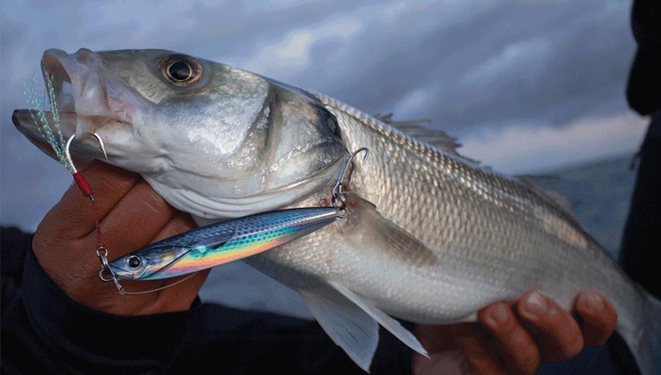 leurres pêche en mer