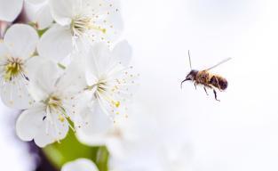 piqûres-d'abeille-lukas-blazek