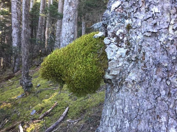 可愛綠色的愛心,是大自然的傑作