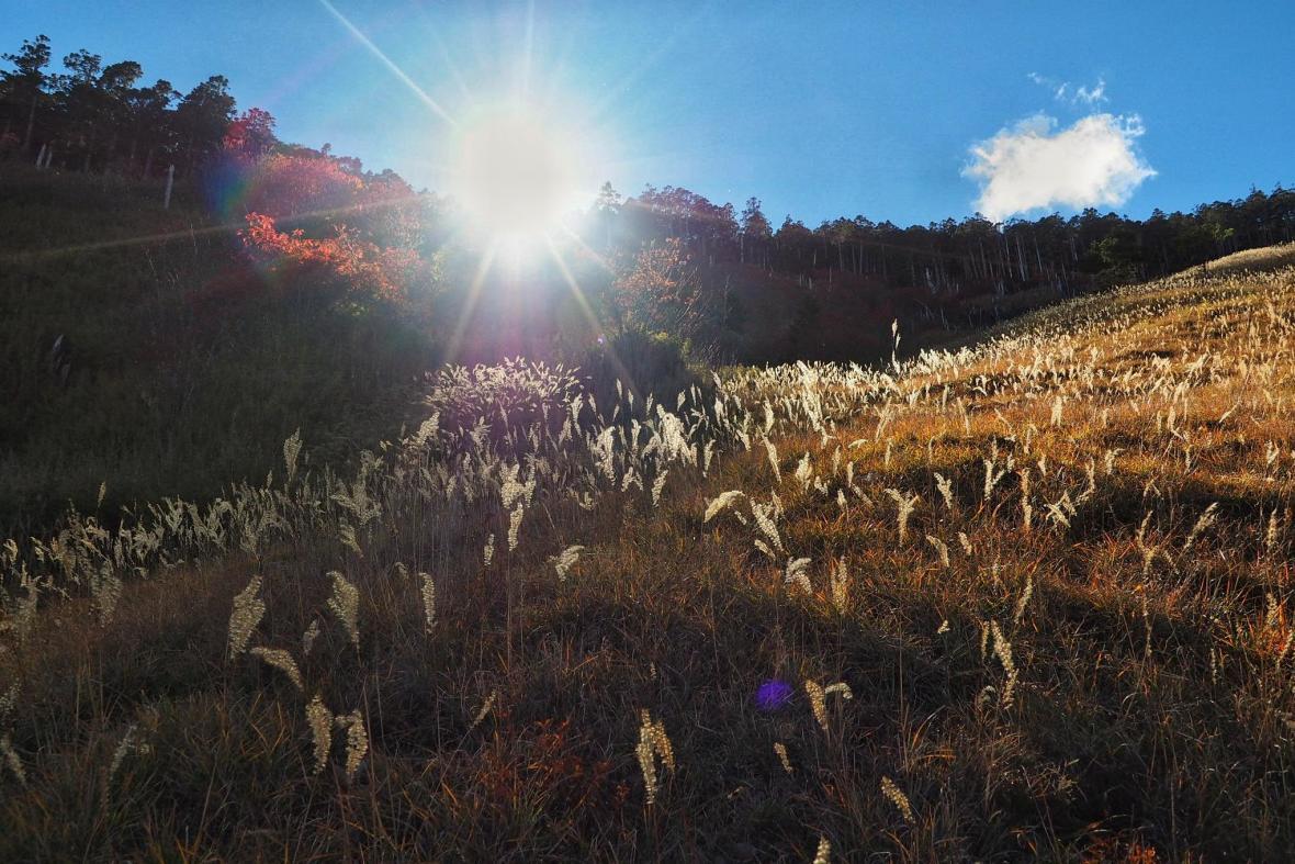 台灣山野的秋冬顏色正美 快來場秋冬的壯遊吧