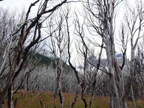 trek dans la vallée France dans le parc national Torres del Paine en patagonie