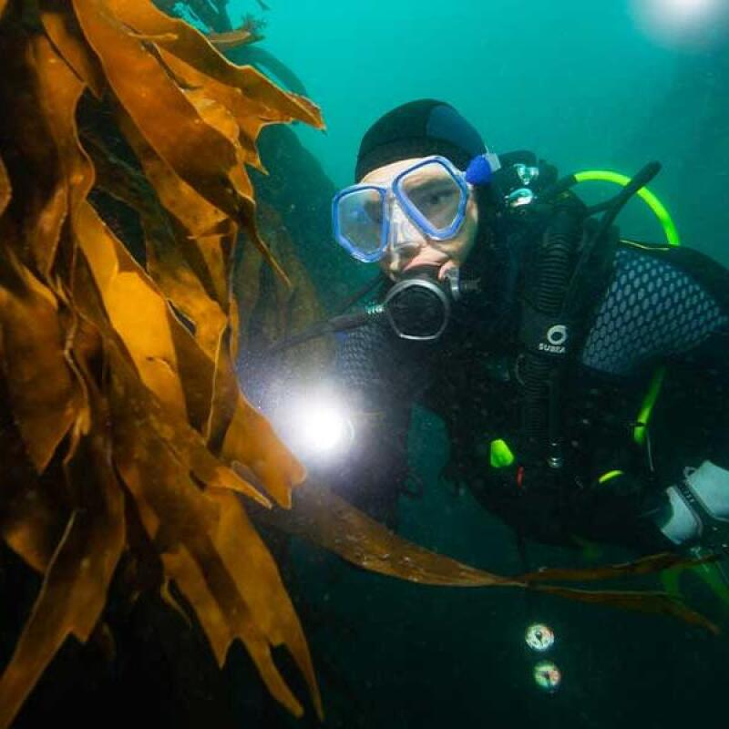 SG-Banner-3-tips-to-have-a-successful-diving-trip