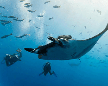 SG-Content-9-where-to-go-diving-for-christmas