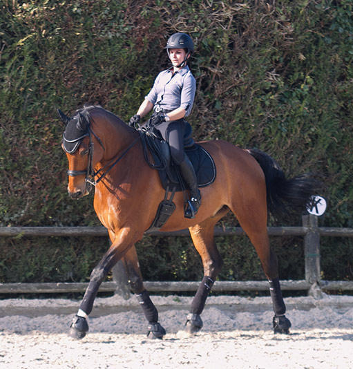 Boutique Dressage