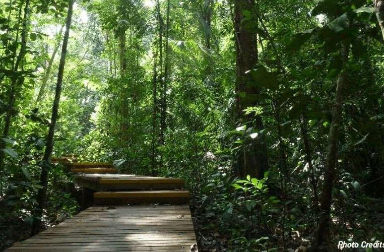 6 Secret Places To Hike In Singapore