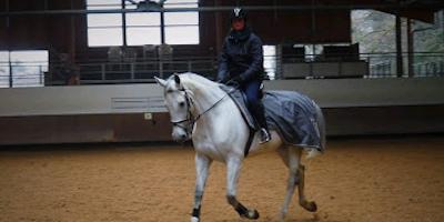 spécialiste équitation