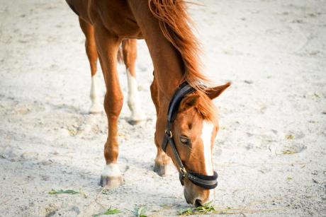 reprendre le contact avec mon cheval