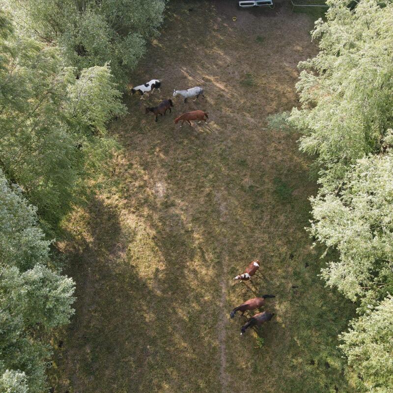 mon cheval est-il bien en prairie