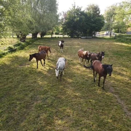 mon_cheval_a_t'il_un_meilleur_ami