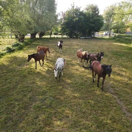 hebergement_cheval_pré