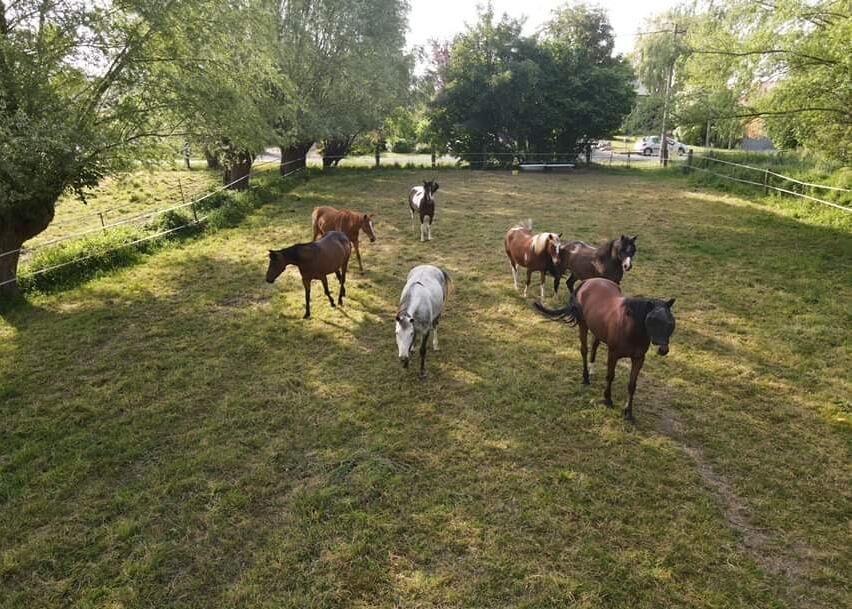 hebergement_cheval_pr