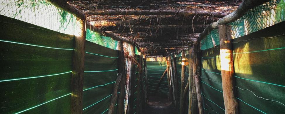 Le tunnel aménagé de Julien dans sa palombière
