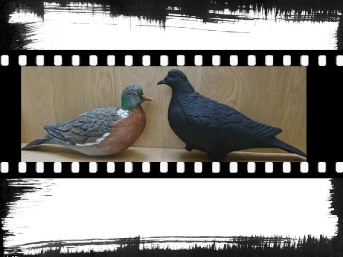Blette de pigeon en bois et blette améliorée 3D