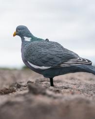 Attelage blettes de pigeon ramier (formes pleines et coques)
