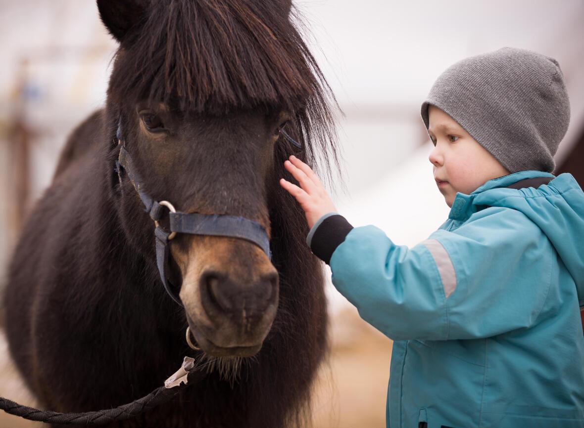 a la découverte du baby poney