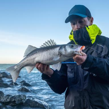 pêche en mer de gros poissons en automne