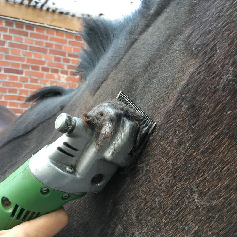 désensibilisation-tondeuse-cheval