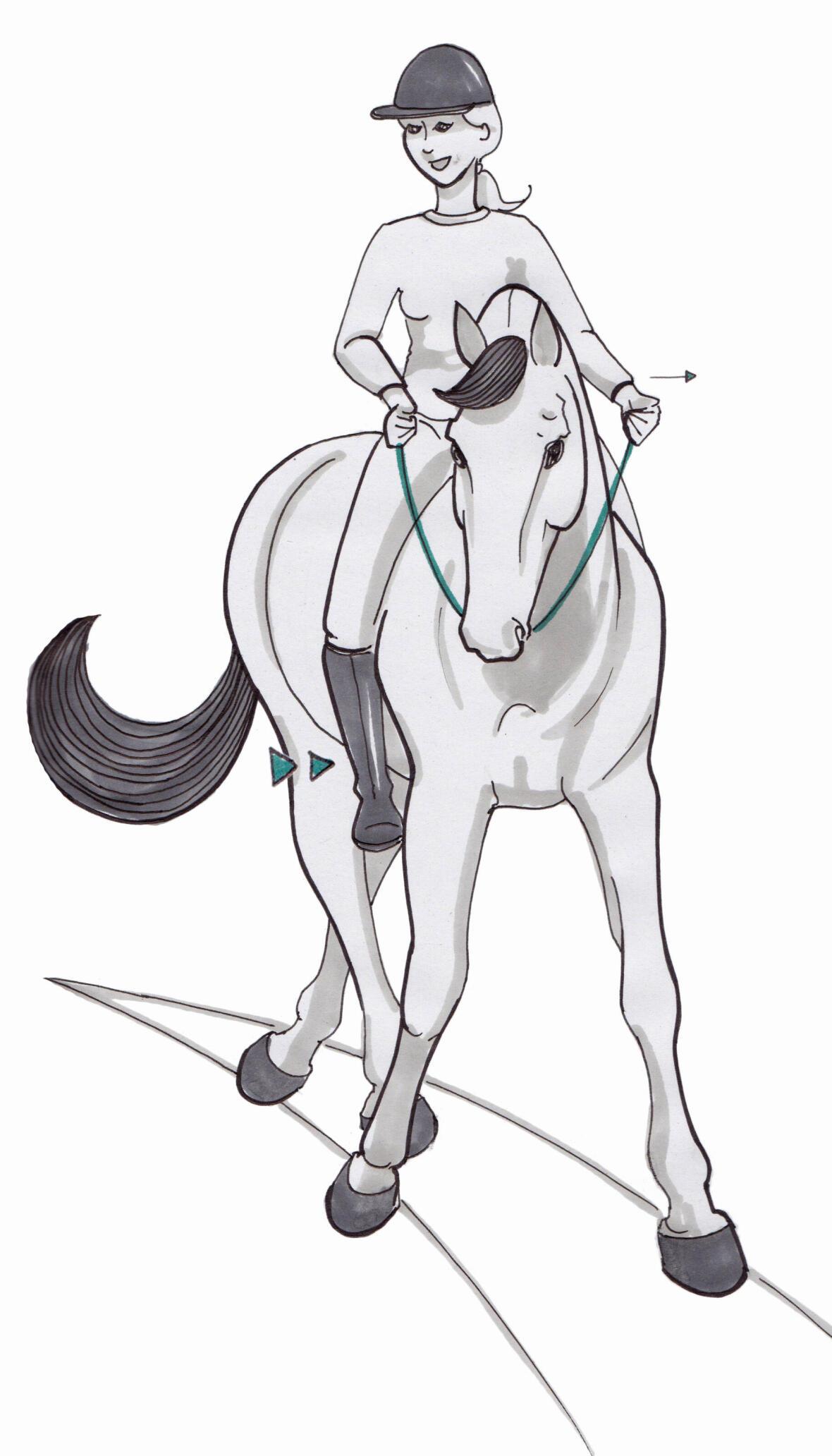 Avoir son cheval en équilibre sur un cercle-cheval-en-equilibre-sur-un-cercle-equitation