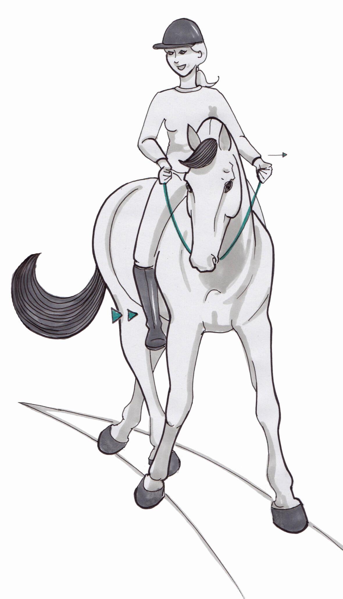 Je paard in balans brengen op de cirkel