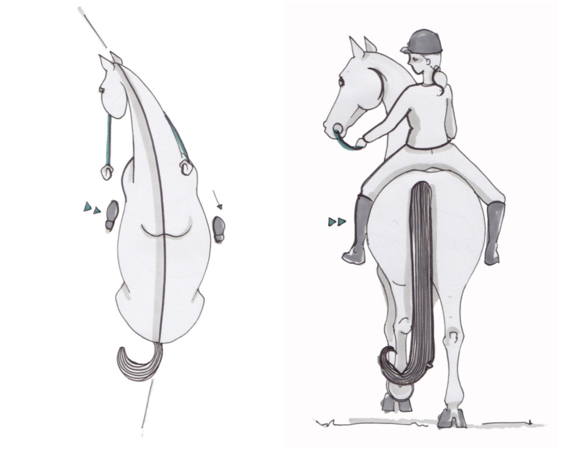 exercice-serpentine-3-boucles-equitation