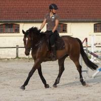 Claire - Leader équitation