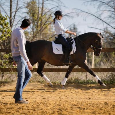 protéger efficacement son cheval des insectes