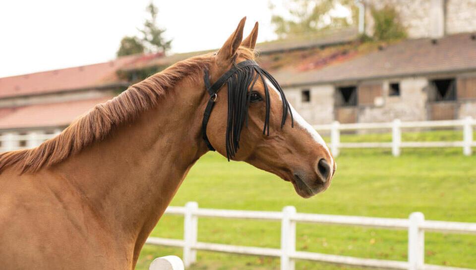 anti insecte cheval