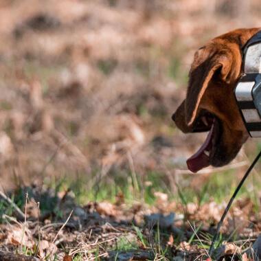 Comment choisir un collier de repérage pour son chien de chasse ?