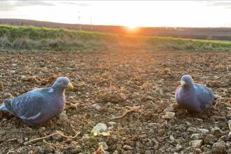 Ils ont testé les formes pigeon Solognac